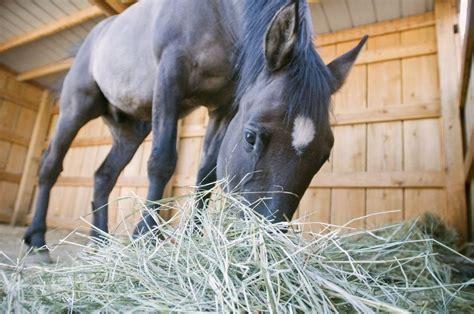 mlive drawn horse