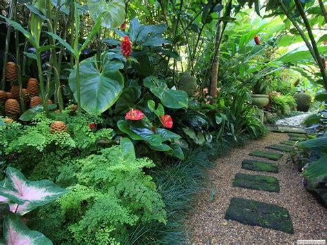 small tropical plants gorgeous layering with mondo grass maidenhair fern and