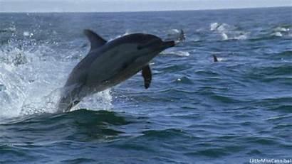 Dolphin Dolphins Sunset Park Caravan Point Gifs