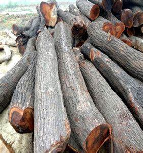 babool wood babool woods suppliers babool wood