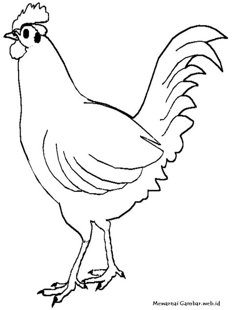 mewarnai ayam