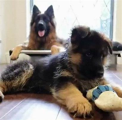 Puppy Puppies Overload Cuteness Dog Funny Reddit