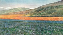Kern County California Wildflower Map Art Postcard 3024 | eBay