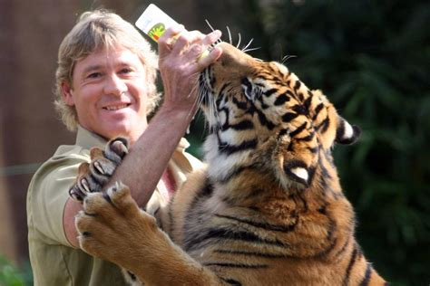 man attacked  tiger  steve irwins australia zoo