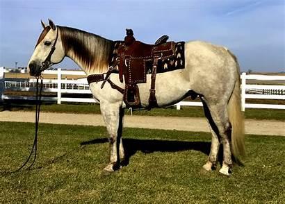 Shake Horse Ranch Schmitt