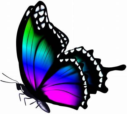 Colorful Butterflies Butterfly Clip