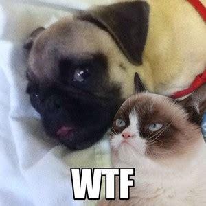 Grumpy Cat vs. Nyan Cat - ANIMEME RAP BATTLES - Grumpy Cat ...