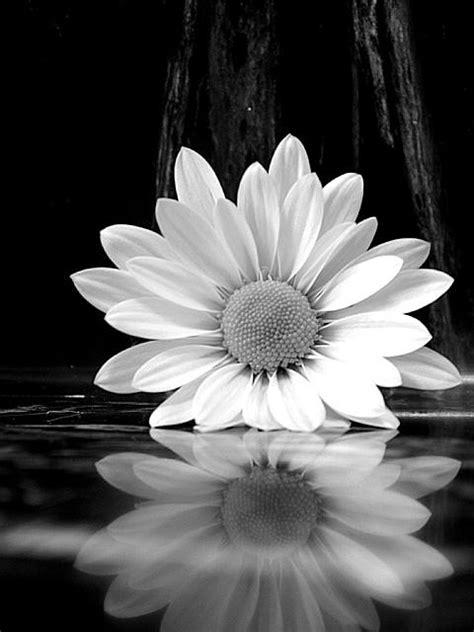 ansel adams flower photography