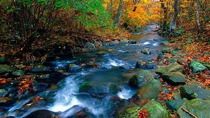 Nature Daytime Covered Stream Leaves Forest Between
