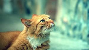 Cat Wallpapers - Purrfect Love