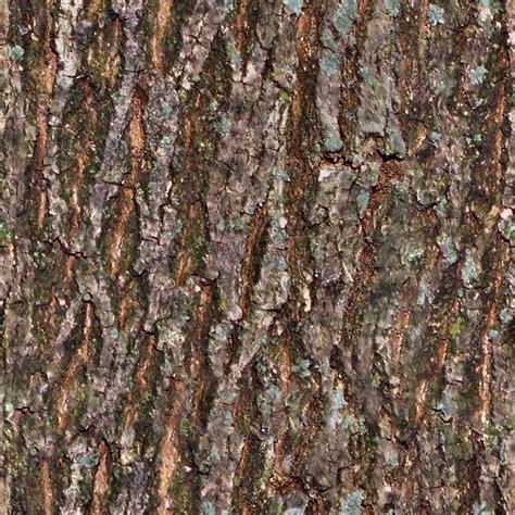tree bark texture seamless tiling tree bark texture opengameart org