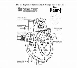 18  Heart Diagram Templates  U2013 Sample  Example  Format