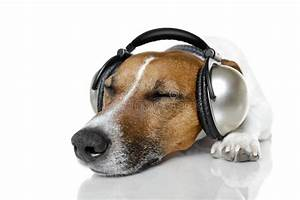Dog listening to music stock image. Image of baby, humor ...