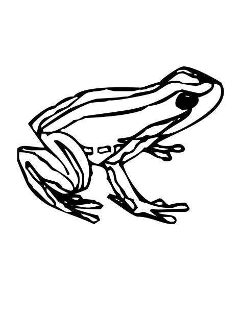 Realistic Frog Coloring Pages Printable Reaic On Grig3org