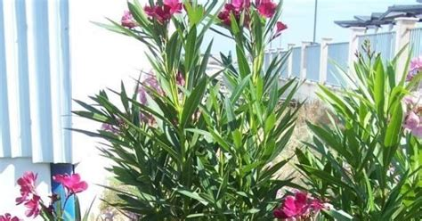 jenis tumbuhan  beracun tuntungan blog