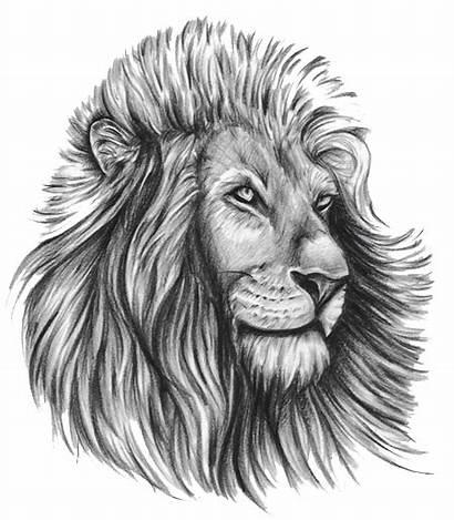 Lion Tattoo Tribal Designs Transparent Tattoos Clipart
