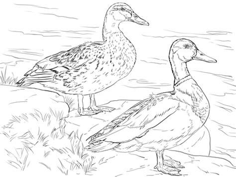 male  female mallard ducks coloring page supercoloringcom