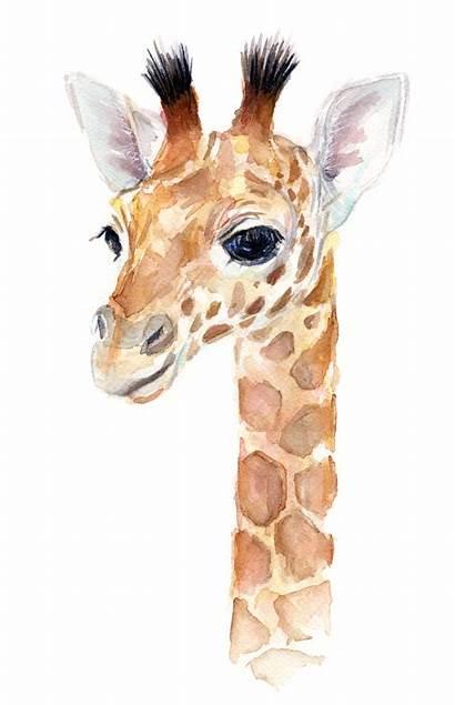 Giraffe Watercolor Animal Olga Shvartsur Painting Nursery