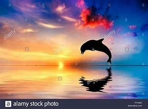 Schöne Delfin Bilder : dolphin tail stockfotos dolphin tail bilder alamy ~ Frokenaadalensverden.com Haus und Dekorationen