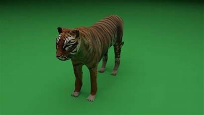 Poly Low Tiger 3d Vr Ar Mammal