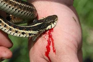 How to Treat a Snake Bite - Top 5 most Venomous Snakes ...