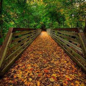 Autumn Bridge  Toronto  Canada Photo On Sunsurfer