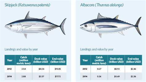 bluefin tuna sushi  yellowfin  trendnet