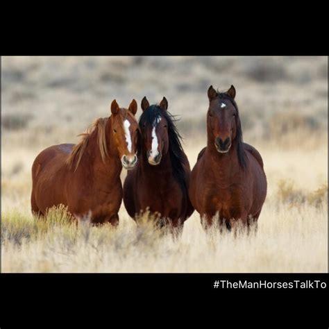horses mammals hooves