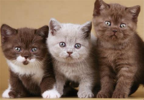 Kā izvēlēties savu kaķi? :: Dzīvnieku pasaules jaunumu ...