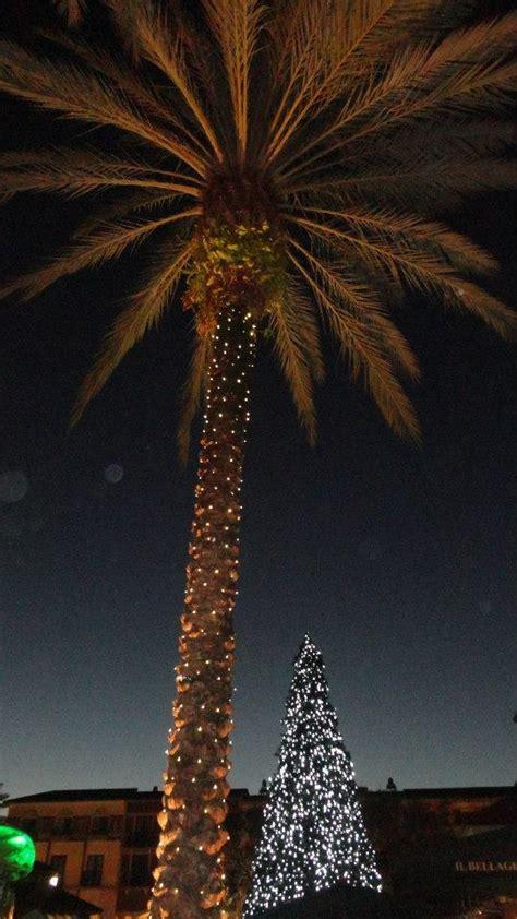 best christmas lights in florida 116 best christmas lights images on pinterest christmas