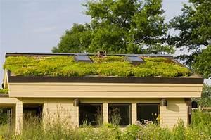 Extensive Dachbegrünung Pflanzen : begr ntes flachdach das sollten sie wissen ~ Frokenaadalensverden.com Haus und Dekorationen