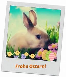 Frohe Ostern Lustig : osterbilder ostergr sse ~ Frokenaadalensverden.com Haus und Dekorationen