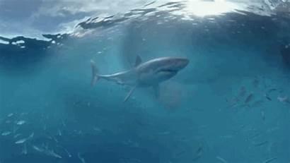 Shark Vr Demo Nightmare Brings Tweet Reality