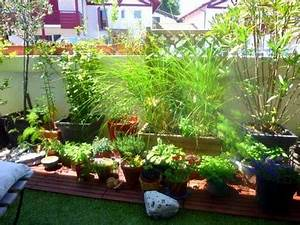 amnagement petit jardin de ville good jardin de ville de With good amenagement de petit jardin 19 citronnier