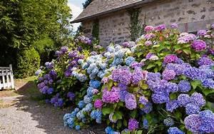 Gartengestaltung Bauerngarten Bilder : neue blumen f r den garten railroad24 ~ Markanthonyermac.com Haus und Dekorationen