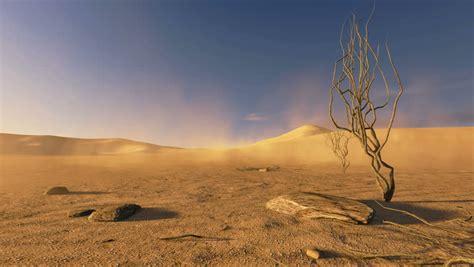 dry tree   desert dunes image  stock photo