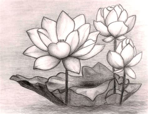 flower drawings art ideas sketches design trends