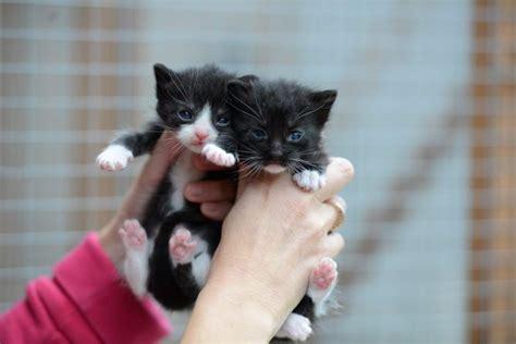 bold cat your cat how to socialise your kitten kitten care