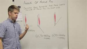Angle Of Muscle Pull