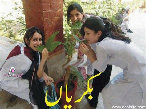 funny pakistani wallpapers gallery
