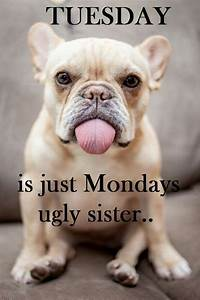 25+ best ideas about Tuesday Humor on Pinterest | Tuesday ...  Tuesday