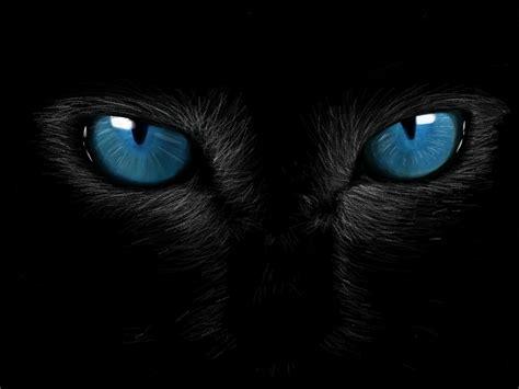 Gatos lectores: Primer literigato cazado!!