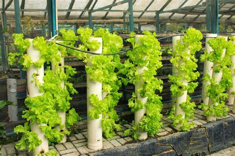 agroplus media vertikultur bagi tanaman organik