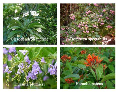 Innovative Sträucher Pflanzen Namen Gartenbau