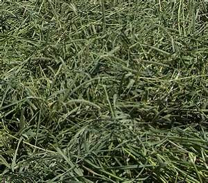 Timothy Hay: What Cutting is Better for Horses?