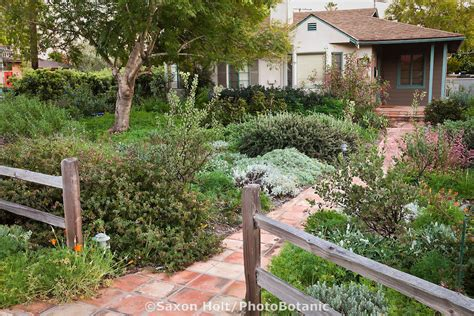 southern california front yard landscaping ideas california bungalow drought resistant garden entering front yard california native plant
