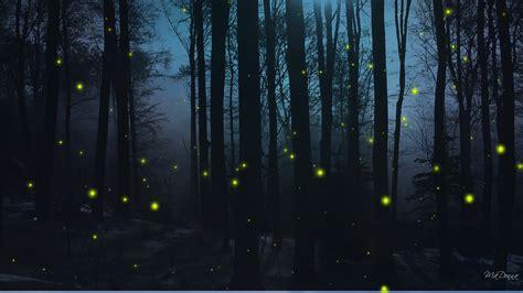 Hd Dark Woods Backgrounds