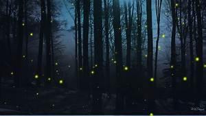 Hd, Dark, Woods, Backgrounds