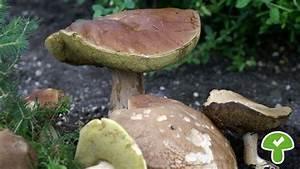 Welche Blumen Kann Man Essen : bildergalerie diese pilze kann man essen las pilze ~ Watch28wear.com Haus und Dekorationen