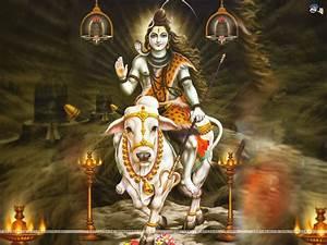 Wallpaper Gallery: Lord Shiva Wallpaper